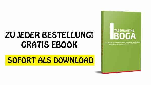 Iboga ebook gratis